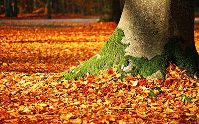 Quoi faire avec les feuilles mortes?